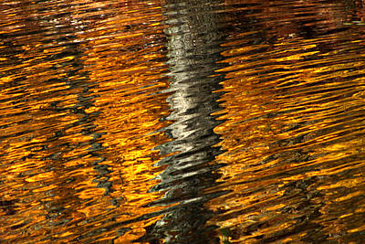 Photograph - Gold Reflection by Emanuel Tanjala