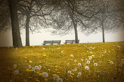 Photograph - Golden Afternoon by Milena Ilieva