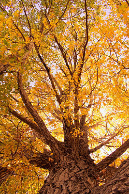 Golden Autumn View Art Print by James BO  Insogna