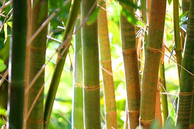 Golden Bamboo Art Print