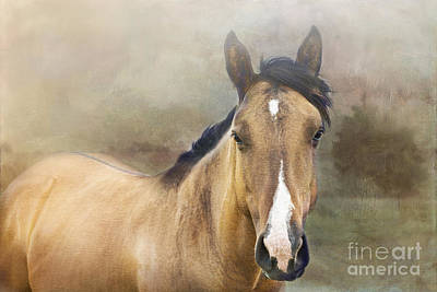Dun Horse Photograph - Golden by Betty LaRue