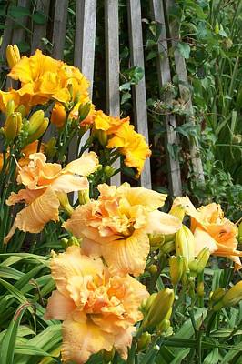 Golden Blossoms Art Print by Sandy Collier