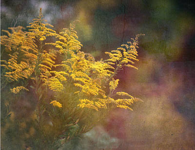 Photograph - Golden by Brenda Bryant