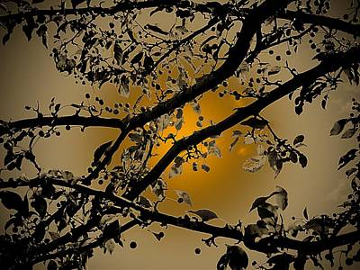 Photograph - Golden Crabapple by Beth Akerman