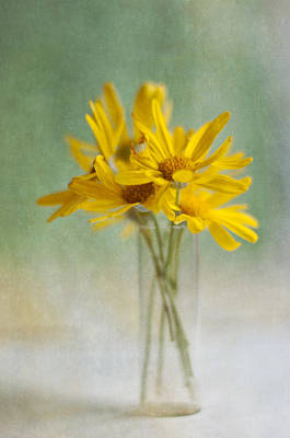 Y120907 Photograph - Golden Daisies by Jill Ferry