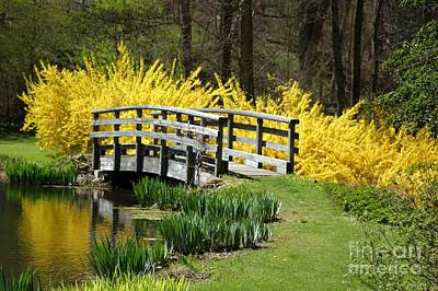 Golden Days Of Spring Art Print by Living Color Photography Lorraine Lynch