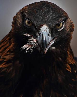 Golden Eagle Feeding Art Print by Pat Gaines
