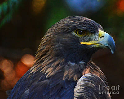 Photograph - Golden Eagle by Jack Moskovita