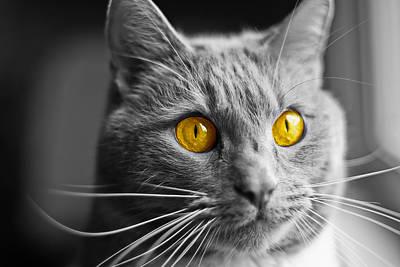 Photograph - Golden Eye by Gene Hilton