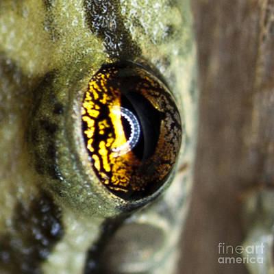 Art Print featuring the photograph Golden Eye by John Burns