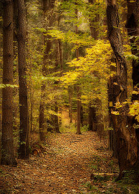 Golden Forest Art Print by Cindy Haggerty
