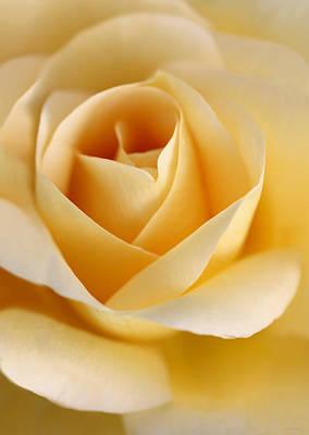 Photograph - Golden Glow Rose Flower by Jennie Marie Schell