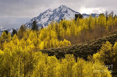 Photograph - Golden Grand Teton by Johanne Peale