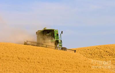 Golden Harvest Original by Mike  Dawson