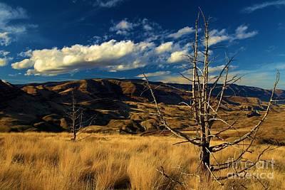 Photograph - Golden Hills by Adam Jewell