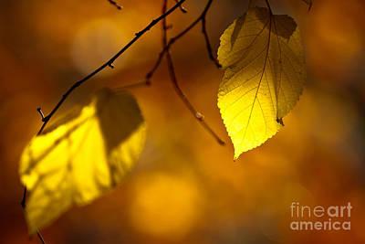 Golden Leaves Art Print by Carl Jackson