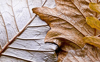 Photograph - Golden Leaves by Carolyn Marshall