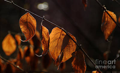 Art Print featuring the photograph Golden Leaves by Vilas Malankar
