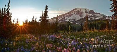Golden Meadows Of Wildflowers Print by Mike Reid