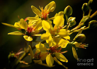 Photograph - Golden Morning Glow by Sherry Davis