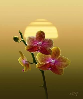 Photograph - Golden Orchid Sunset by IM Spadecaller