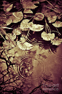 Photograph - Golden Pond by Silvia Ganora