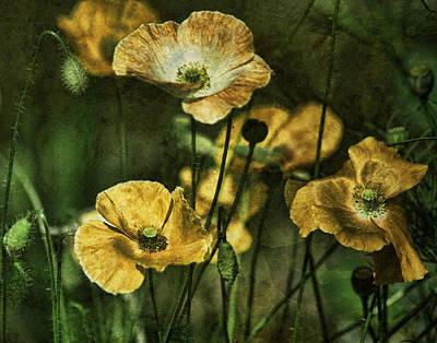 Golden Poppies Art Print by Bonnie Bruno