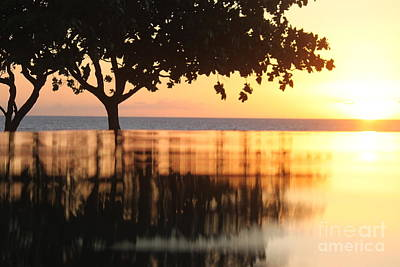 Photograph - Golden Reflections by Terri Thompson