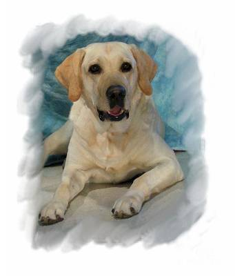 Retriever Digital Art - Golden Retriever 190 by Larry Matthews
