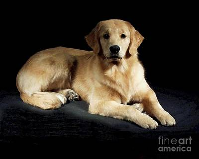 Retriever Digital Art - Golden Retriever 250 by Larry Matthews