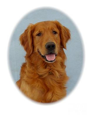 Retriever Digital Art - Golden Retriever 296 by Larry Matthews