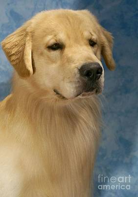 Retriever Digital Art - Golden Retriever 507 by Larry Matthews
