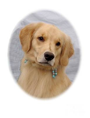 Retriever Digital Art - Golden Retriever 533 by Larry Matthews
