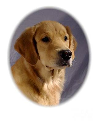 Retriever Digital Art - Golden Retriever 70 by Larry Matthews