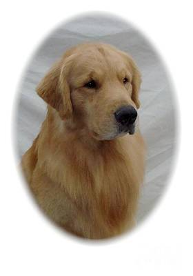 Retriever Digital Art - Golden Retriever 70b by Larry Matthews