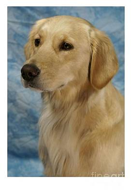 Retriever Digital Art - Golden Retriever 765 by Larry Matthews
