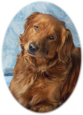 Retriever Digital Art - Golden Retriever 772 by Larry Matthews