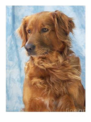 Retriever Digital Art - Golden Retriever 774 by Larry Matthews