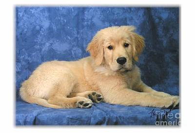 Retrievers Digital Art - Golden Retriever Pup by Maxine Bochnia