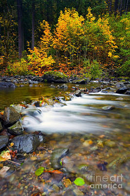 Skate Creek Photograph - Golden Shores by Mike  Dawson