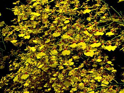Photograph - Golden Shower Orchids by Chua  ChinLeng