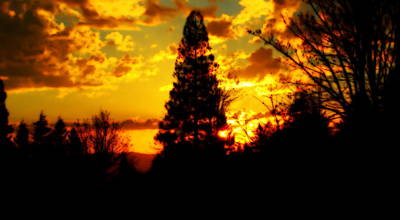 Photograph - Golden Silhouette by Kathy Sampson