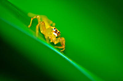 Photograph - Golden Spider by Chua  ChinLeng
