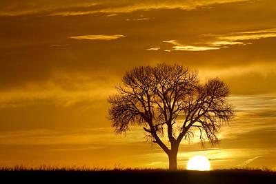 Golden Sunrise Silhouette Art Print by James BO  Insogna