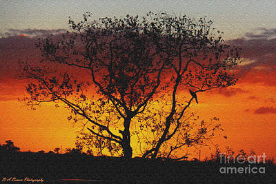 Photograph - Golden Sunset Over Circle B Bar Sandstone by Barbara Bowen