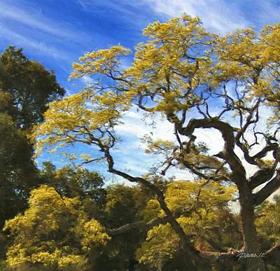Photograph - Golden Tree Carmel Valley by Jim Pavelle