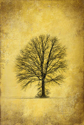Art Print featuring the photograph Golden Tree by Mary Timman