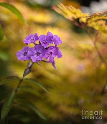 Garden Photograph - Golden Violets by Mike Reid