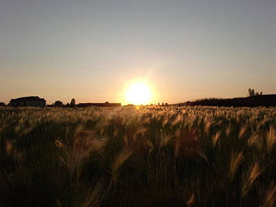 Golden Wheat Sunset Original by Brian  Maloney