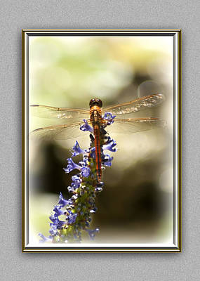 Blue Dragon Fly Photograph - Golden Wings by Carolyn Marshall